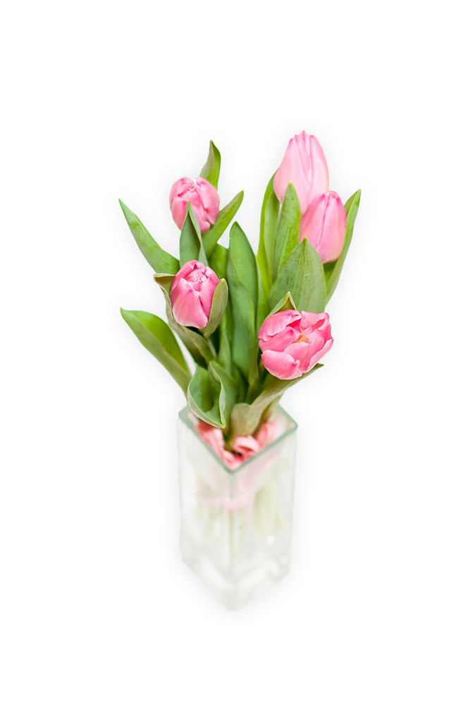 Pět čerstvých tulipánů svázaných lýkem