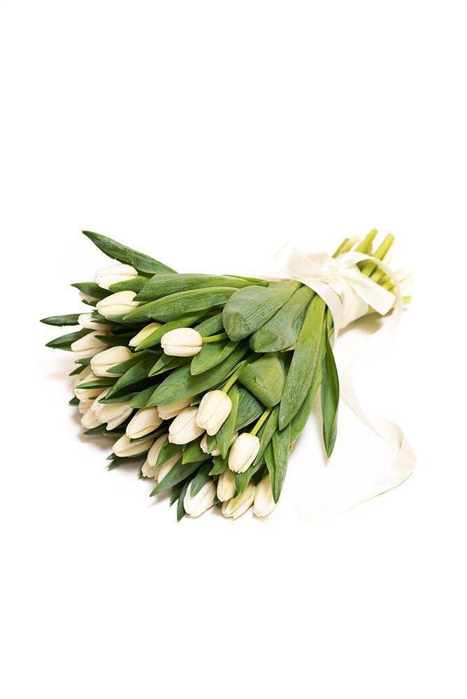 30 čerstvých BÍLÝCH tulipánů