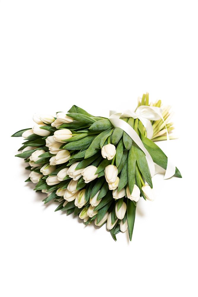 50 čerstvých BÍLÝCH tulipánů