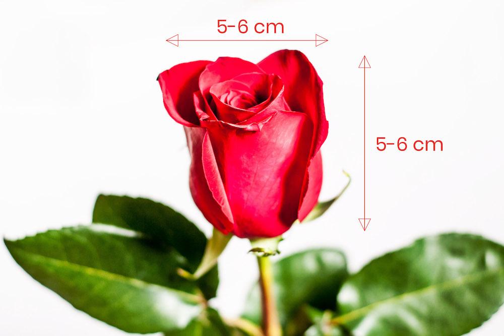 7 růží v jednoduché vazbě
