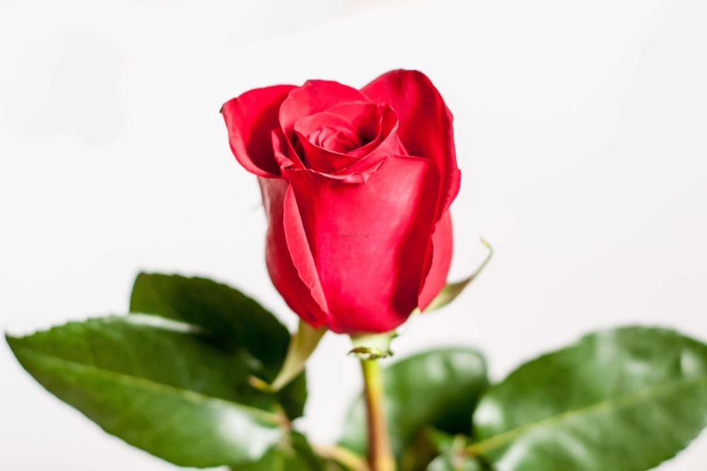 Box růží a Marlenka kuličky