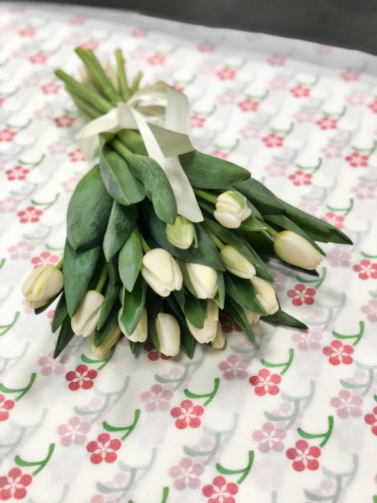 15 čerstvých BÍLÝCH tulipánů